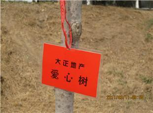 大正爱心树