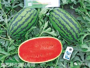 豫艺K151西瓜