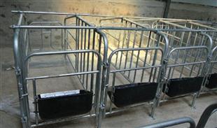 黄泛区养殖设备-限位栏系列