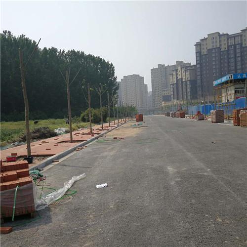 兰考县文体路