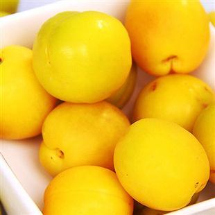 新疆小白杏