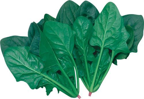 墨玉绿菠菜