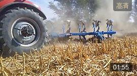 郑州龙丰B550镜面犁配套东方红LF2204新疆博乐星火公社玉米茬地