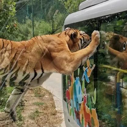 竹海野生动物园一日游