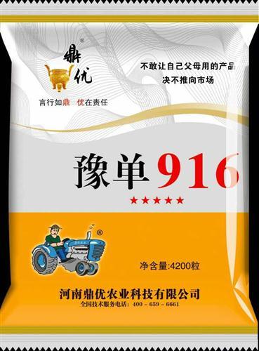 豫单916(审定编号:豫审玉2011015)