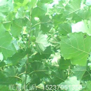 朝阳县杨树弯乡地图