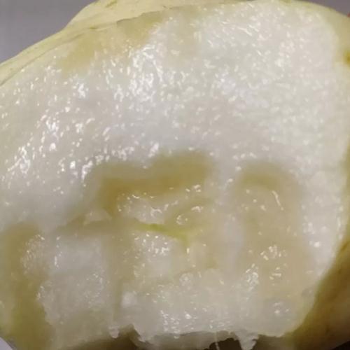 津香蜜(西洋梨)